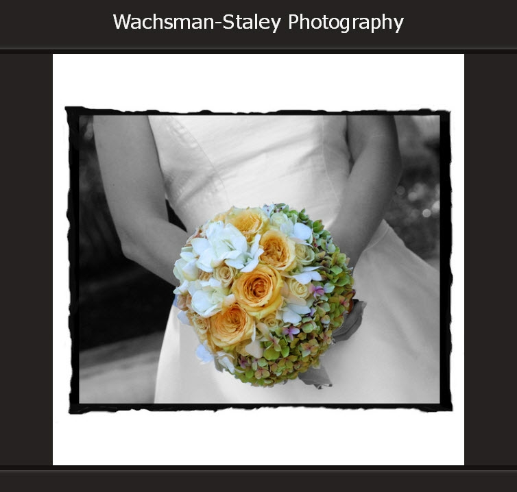 Wachsman-Staley Photography
